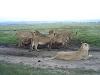 comp_aruba-camp-mara-6-www-lofty-tours-com