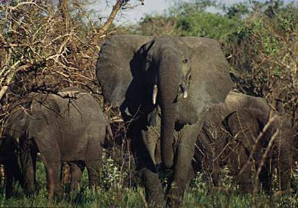 elefant_003