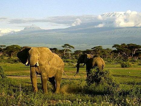 elefant_004
