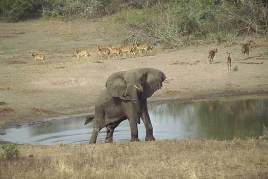 elefant_005
