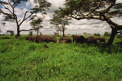 elefant_010