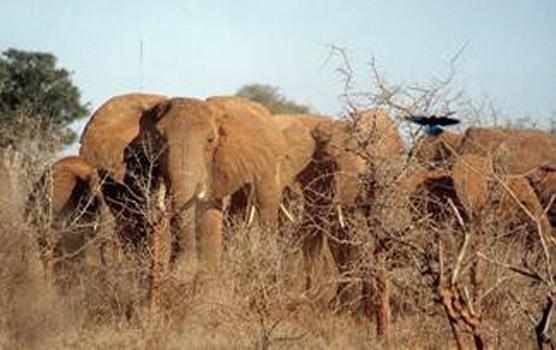 elefant_014
