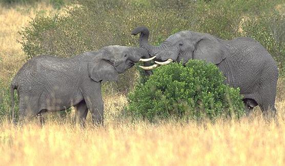 elefant_016