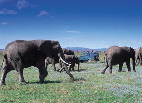 elefant_018