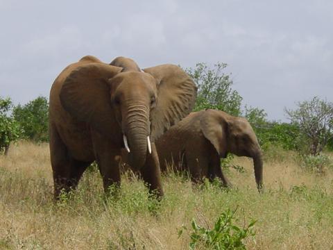 elefant_021