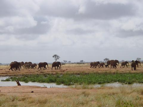 elefant_022