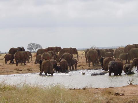 elefant_024
