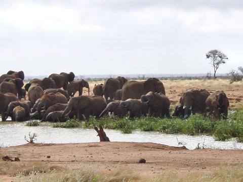 elefant_025