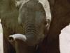 elefant_009