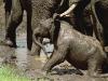 elefant_011