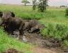 elefant_012