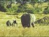 elefant_015