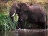 elefant_017