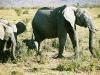 elefant_019