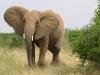 elefant_020