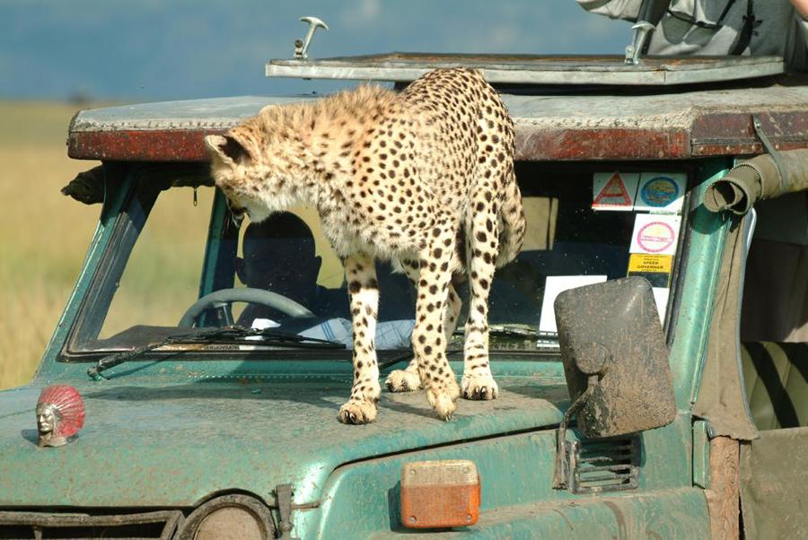 lofty_tours_geparden_safari_04