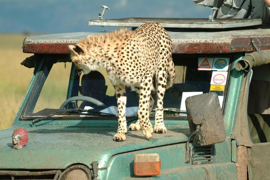 lofty_tours_geparden_safari_04
