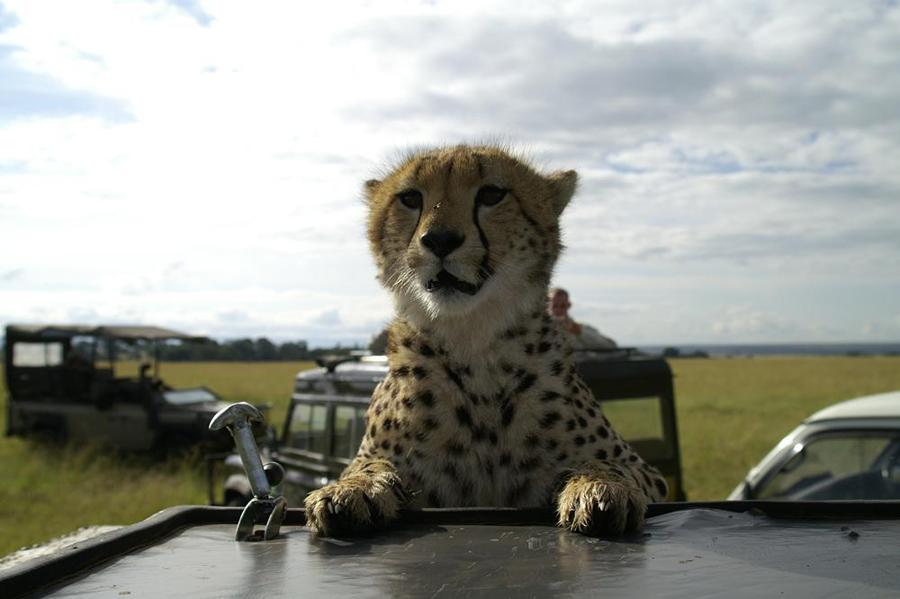 lofty_tours_geparden_safari_09