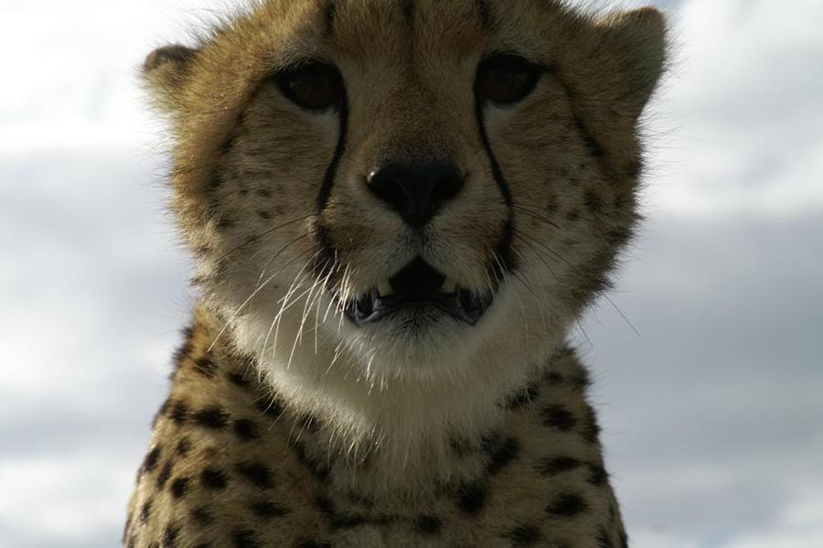 lofty_tours_geparden_safari_10