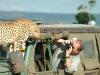 lofty_tours_geparden_safari_07