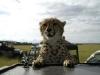 lofty_tours_geparden_safari_09