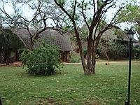 comp_tsavo-west-kilanguni-serena-lodge-www-lofty-tours-11