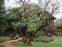 comp_tsavo-west-kilanguni-serena-lodge-www-lofty-tours-18