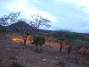 comp_tsavo-west-kilanguni-serena-lodge-www-lofty-tours