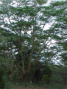 land_und_leute_kenia_42