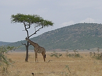 comp_masai-mara-www-lofty-tours-com-2