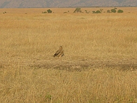 comp_masai-mara-www-lofty-tours-com-2_0