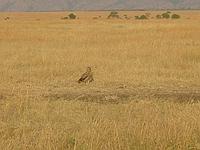 comp_masai-mara-www-lofty-tours-com-2_0