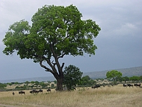 comp_masai-mara-www-lofty-tours-com-3
