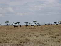 comp_masai-mara-www-lofty-tours-com-3_0
