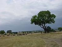 comp_masai-mara-www-lofty-tours-com-4