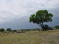 comp_masai-mara-www-lofty-tours-com-4