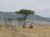 comp_masai-mara-www-lofty-tours-com