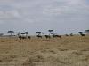comp_masai-mara-www-lofty-tours-com-3_0