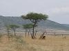 comp_masai-mara-www-lofty-tours-com