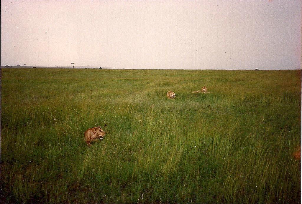 comp_masai-mara-fig-tree-camp-may-1989-www-lofty-tours-com0016