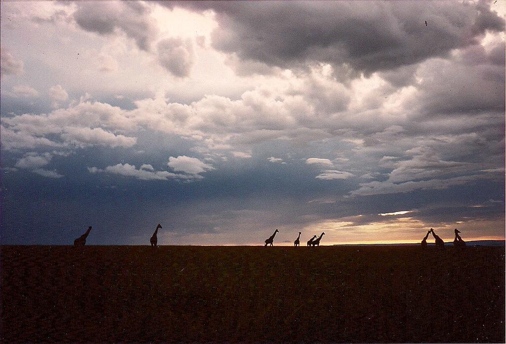 comp_masai-mara-fig-tree-camp-may-1989-www-lofty-tours-com0019