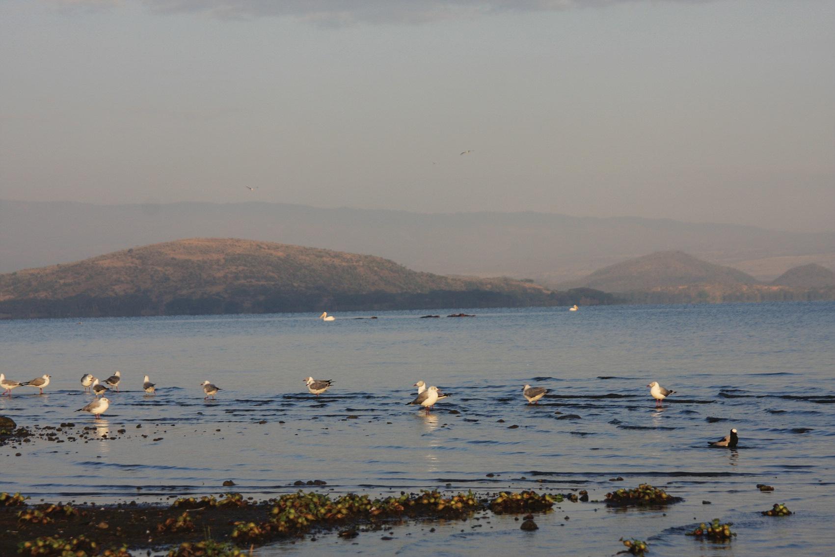 comp_seagulls2