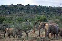 comp_elephants-below-ol-malo-house