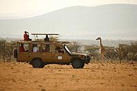 comp_olseki_safari_high