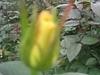 comp_img_0225-1