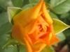 comp_img_0246-1