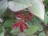 comp_img_0253-1