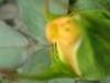 comp_img_0255-1