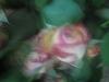 comp_img_0323-1