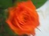 comp_img_0371-1_0